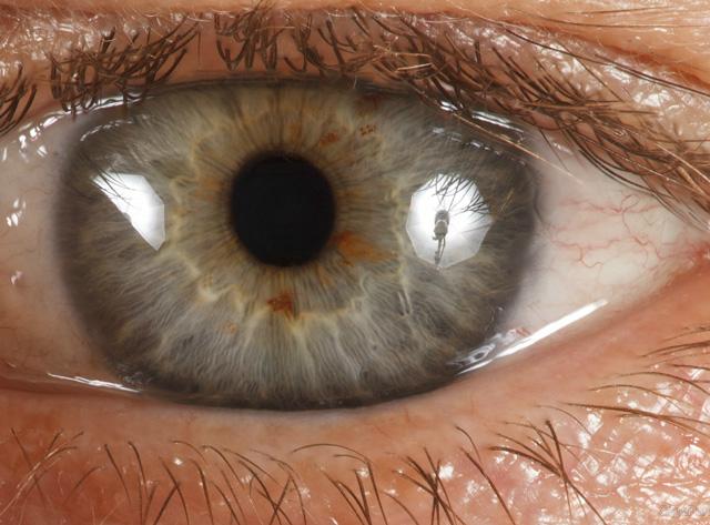 Unglaubliche Details selbst unter extremen Zoom (Bild: Daniel Boschung / RoboPhot)